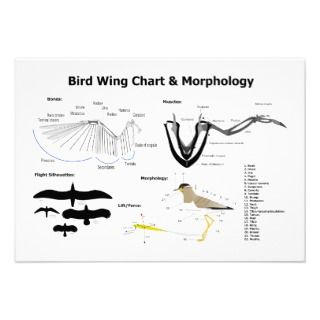 Diagram of the Anatomy of Bird Wings Invitation