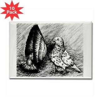 Fireball Roller Pigeons for Sale on PopScreen