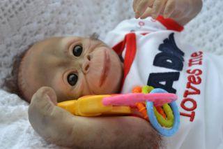 So Cute ♥ REBORN BABY BOY ORANGUTAN MONKEY CHIMP WAS BINDI NOW KOKO