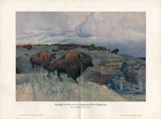 C1900 Bisons Buffalo Magdalenian Period Antique Print H Kraemer
