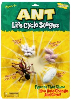 Ant Life Cycle Stages Grow Insect Lore Toy Model Larve Egg Pupa Age 4