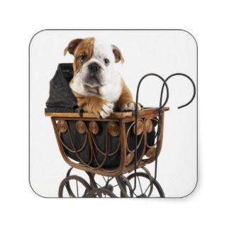 English Bulldog Puppy in a Baby Carriage Stickers