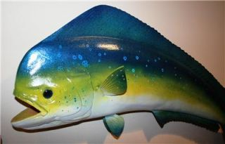 XL 34 inch Mahi Mahi Dolphin Fish Mount Cool Colors