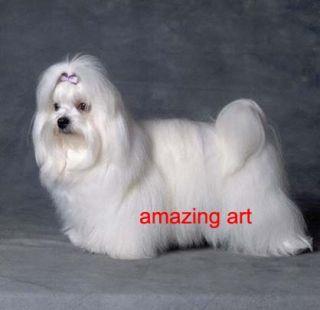 Original Hand Painted Animals Oil Painting Maltese Dog