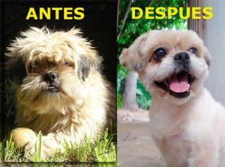 Mascotas Recargable Corte de Pelo Con Maquina Perros Mascota