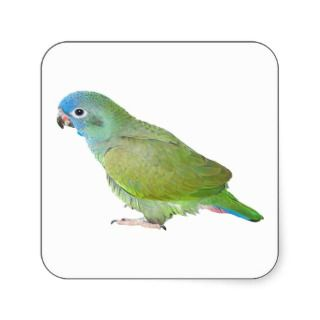 Blue Head Pionus Parrot Square Sticker
