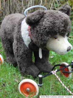 Antique Steiff Teddy Bear on Wheels 1950s Brown Bear w Growler RARE