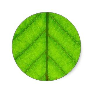 Green Leaf Stickers