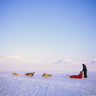 Husky Dog Sled Team, Spitsbergen, Norway, ope Photographic Print by David Lomax