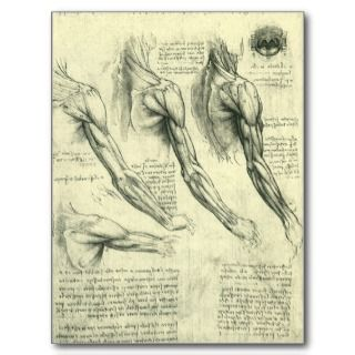 Arm and Shoulder Muscles Anatomy Leonardo da Vinci Postcard