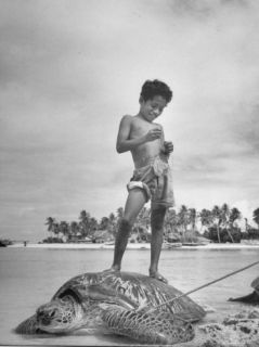 Boy Stands on Huge Tortoise Whose Shell Will Bring $1.75 a Pound Premium Photographic Print by Eliot Elisofon