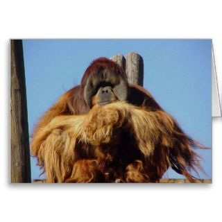 Orangutan Happy Birthday Template Card