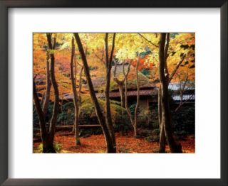 Maple Trees at Giou Ji Temple in Autumn, Kyoto, Japan Pre made Frame