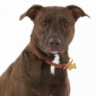 Designer Dog Collar � Weaver Designer Leather Dog Collars