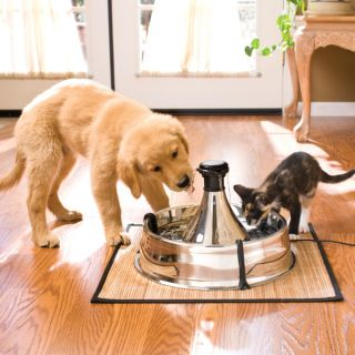 Drinkwell 360 Stainless Steel Pet Fountain   Cat   Boutique