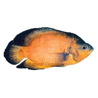 Aquarium fish live fish for sale for Fish for sale online