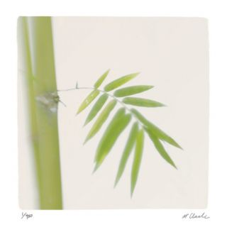 Bamboo Study 12 Limited Edition by Claude Peschel Dutombe