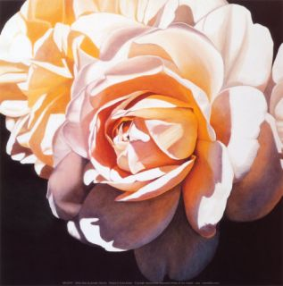 White Rose Print by Jennifer Harmes