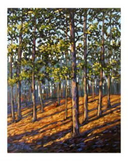 Late Day Light in Hudson Valley Woods Giclee Print by Patty Baker