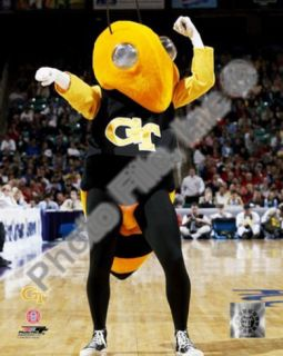 Georgia Tech Yellowjacket Photo