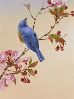 Blue Bird on Cherry Blossom Branch Posters