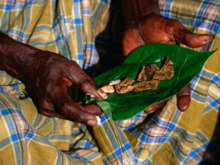 Indigenous Veddah or Wanniyala Aetto Man Holding Betel Nuts, Colombo, Sri Lanka Photographic Print by Dallas Stribley