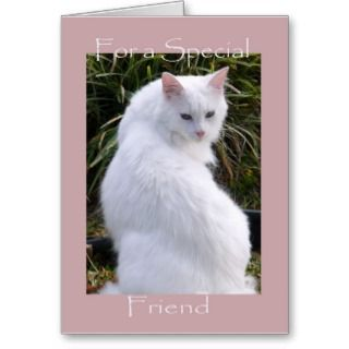 Birthday, Friend, sweet white cat Greeting Cards