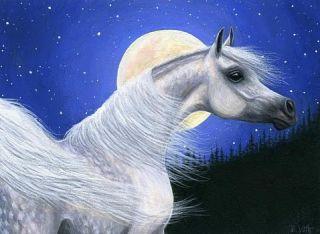 Grey arabian horse moon limited edition aceo print art