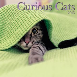 Curious Cats   2013 Wall Calendar Calendars