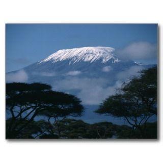 Kilimanjaro and Acacia Trees Postcards