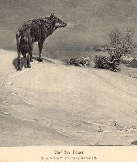 Lauer Wolf Gemälde von A. Wierusz Kowalski HOLZSTICH II 285