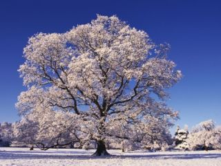 Snow covered Tree in Belvoir Park Photographic Print by Geray Sweeney