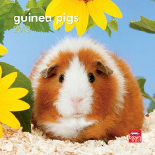 Guinea Pigs   2013 Mini Calendar Calendars