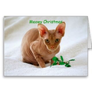 have a very meowy christmas a sphinx cat makes a cute christmas card