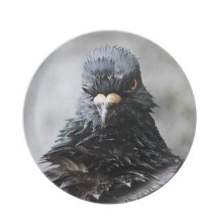 Angry Bird Pary Plae