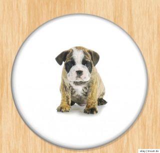 Bulldoggen sehr süß verschiedene Motive AUSWAHL Button, Magnet
