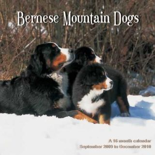 Bernese Mountain Dogs 2010 Calendar