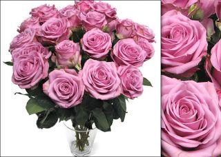 Bouquet of 75 Lavender Roses (18 inch Stem Length)