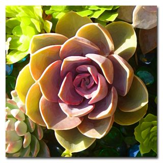 Amy Vangsgard Succulent Pond VI Canvas Art