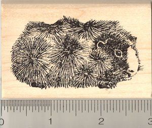 Abyssinian Guinea Pig Rubber Stamp   Wood Mounted Arts