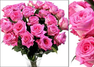 150 Hot Pink Wholesale Roses (18 in. stem length)