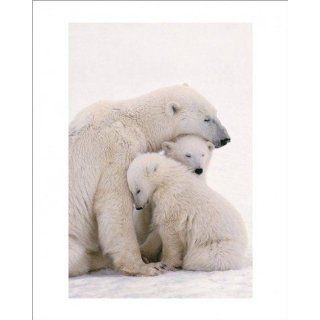 Eisbären   Kuschelbären Familie Poster Kunstdruck (50 x 40cm